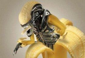 Banana of Destiny