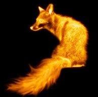 Le renard au sel beurré